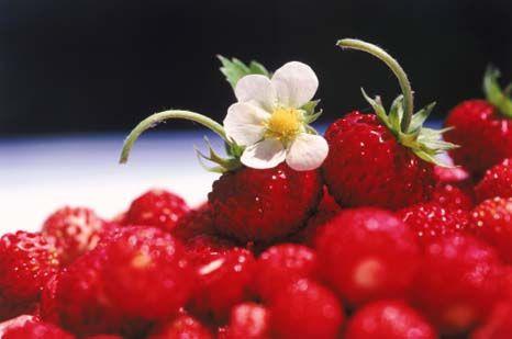 Frutos vermelhos: os super alimentos do século XXI