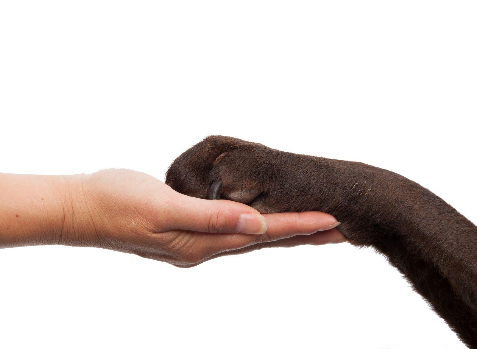 Dog Paw AR.jpg