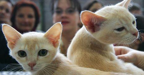 Conheça os 29 gatos mais premiados em 2010