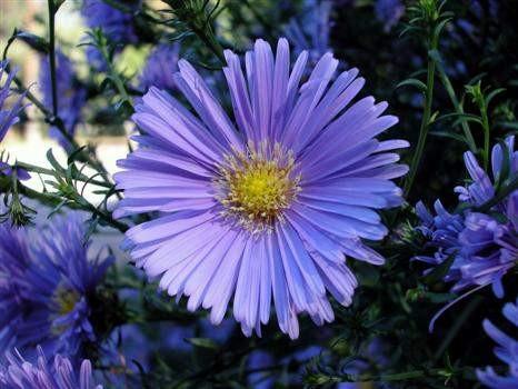 10 flores que curam doenças: saiba quais são!