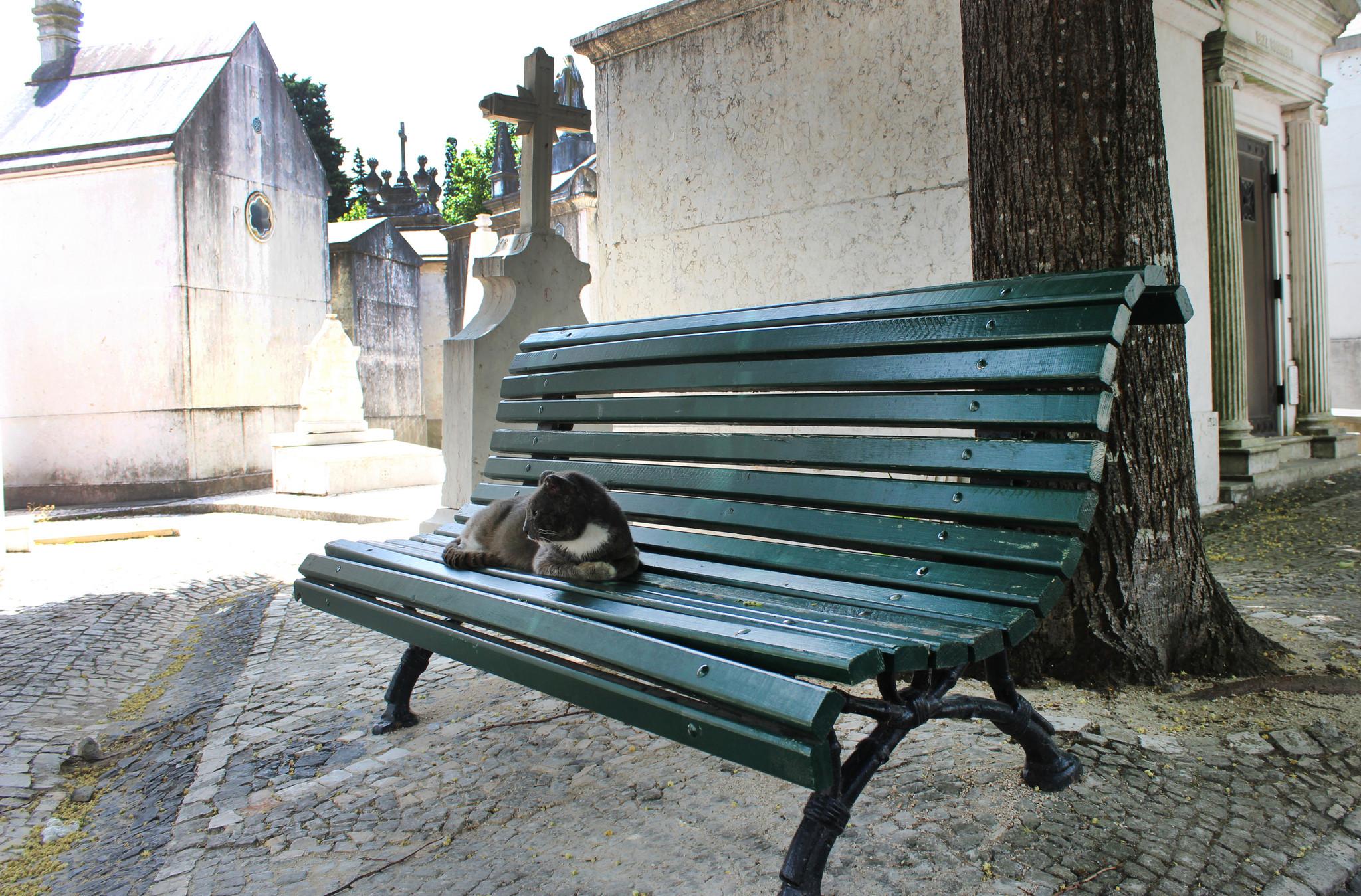RR Cemiterio Prazeres 02.jpg