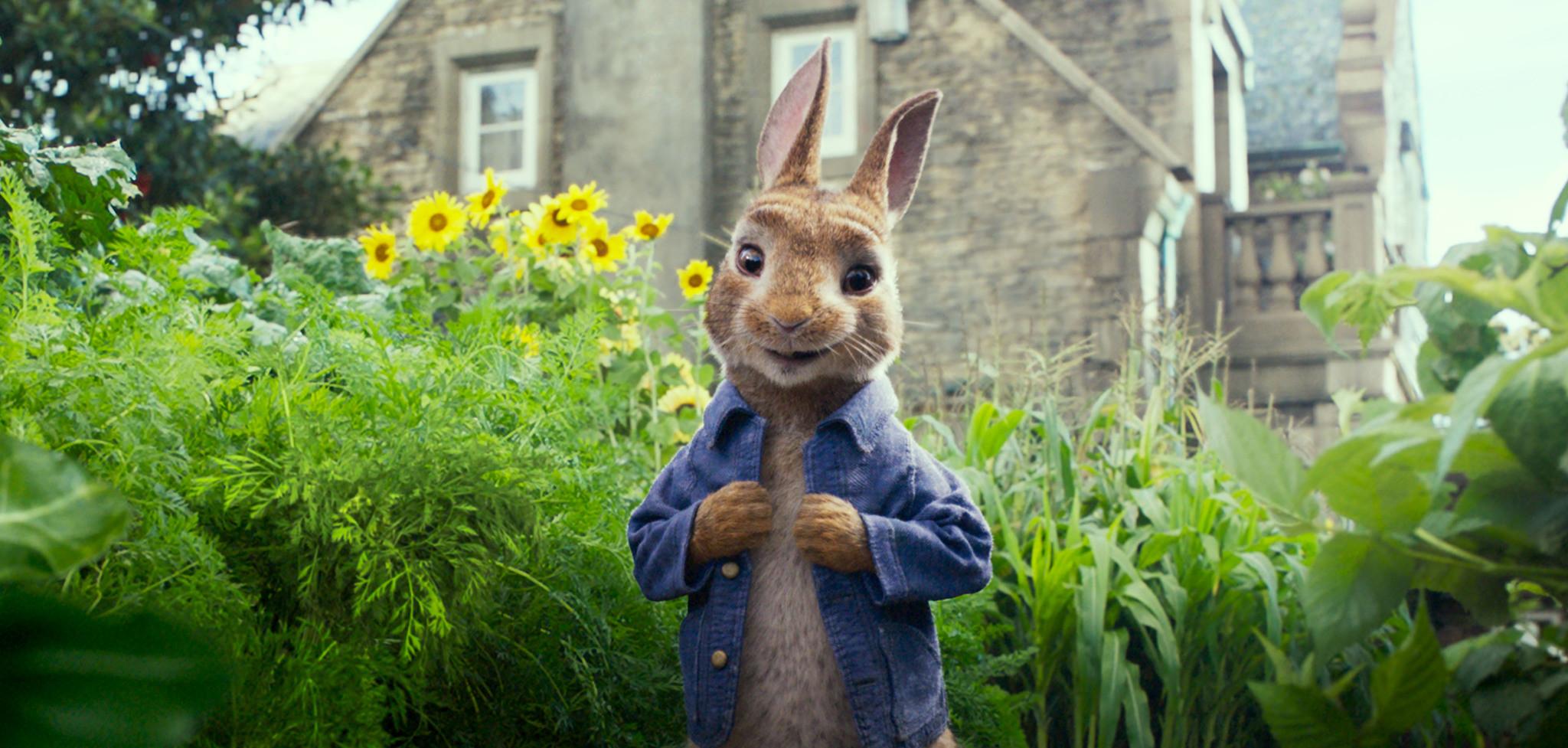 peter rabbit3.jpg
