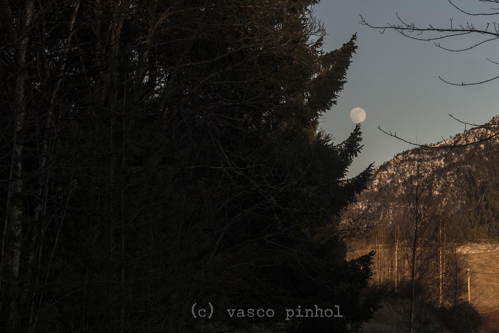 _VP24875Paaske_skiing.jpg