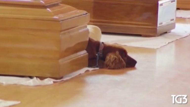 cão sismo itália