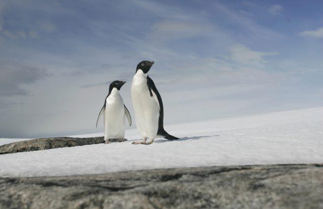 Fotos de pinguins que não podes perder 3