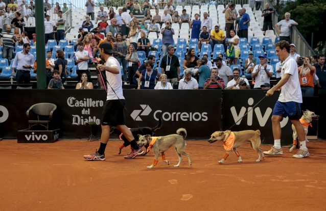 Caés apanha-bolas fazem estreia em torneio de ténis na cidade de São Paulo 1