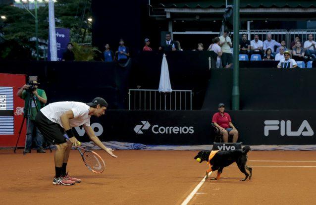 Caés apanha-bolas fazem estreia em torneio de ténis na cidade de São Paulo