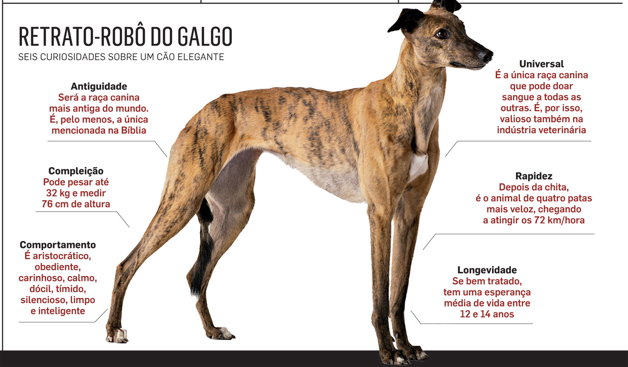 Info Galgos