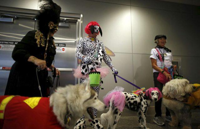 Cães prontos para o Halloween 10
