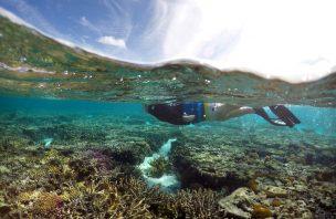 Especialistas não têm dúvidas: Muitos dos danos na Grande Barreira de Coral são irreversíveis
