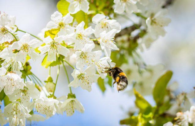 Estudo mundial encontra pesticidas em 75% de amostras de mel