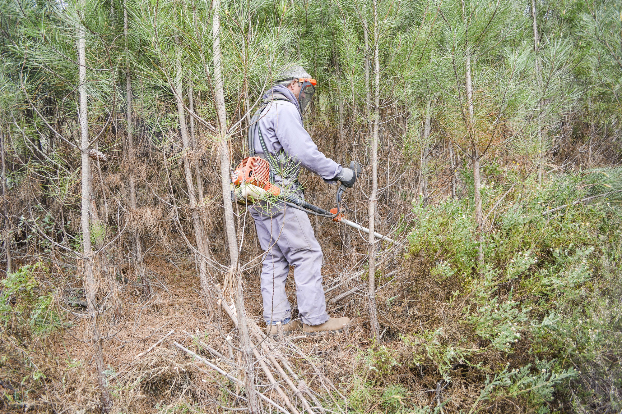Proprietários têm mais dois meses e meio para limpar os terrenos