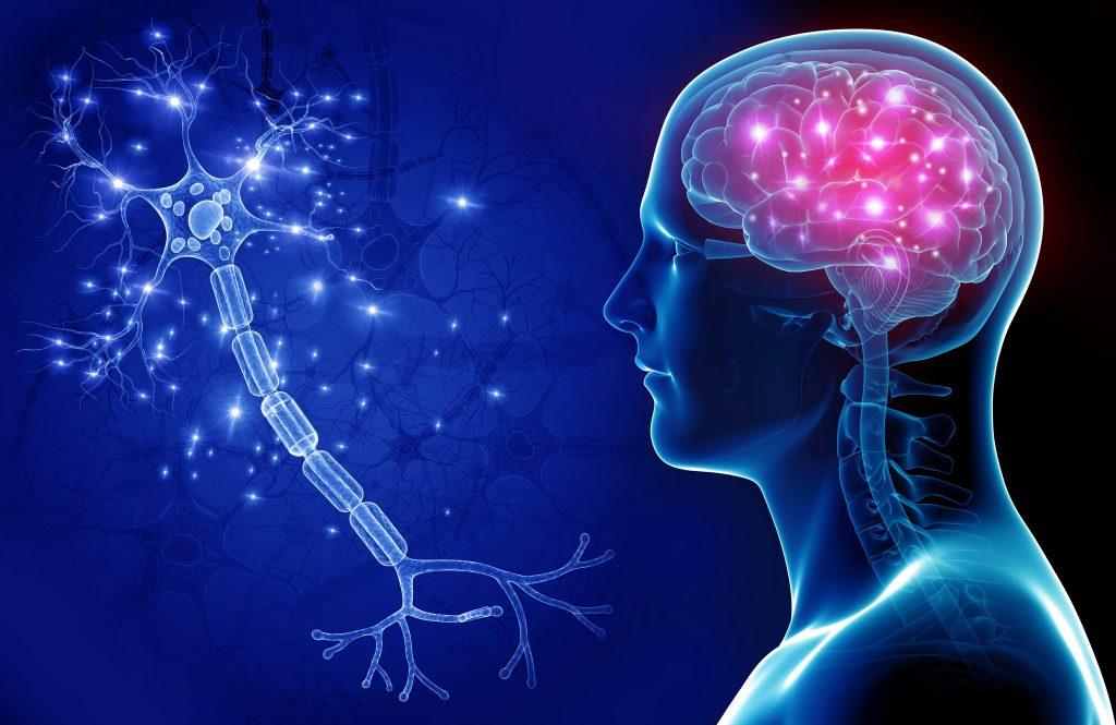 Só usamos mesmo 10% do nosso cérebro. Mito ou realidade?