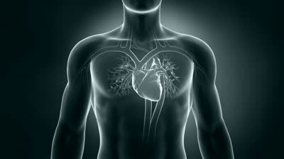 stock-footage-human-xray-heart-anatomy.jpg