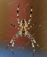 users_0_15_homem-aranha-ciencia-1d32.jpg