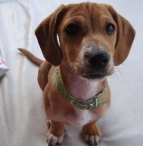 users_731_73141_cute-dog-2164.jpg