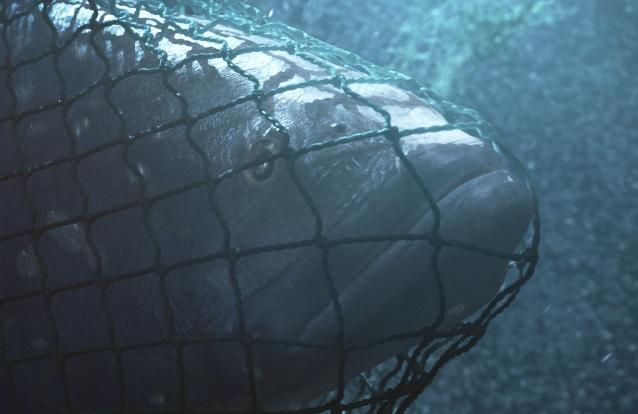"""Novo documentário de DiCaprio grita: """"Salvem as baleias"""""""